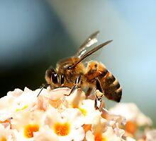 Bee by margotk