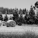 Rolled Hay by Pierre