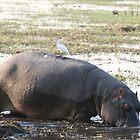 Hungry Hippo by Christie Harvey