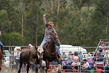 Picton Rodeo Tag by Sharon Robertson