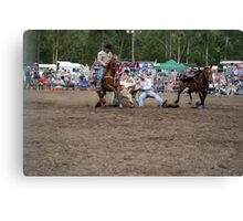Picton Rodeo STEER2 Canvas Print