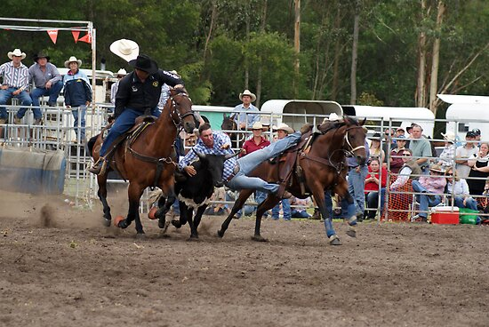 Picton Rodeo STEER3 by Sharon Robertson