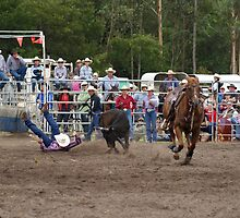 Picton Rodeo STEER4 by Sharon Robertson