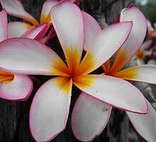 Flower Power by Carol Field