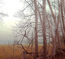 Ash trees and mist  by Roz McQuillan