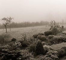 Garden in morning mist by Mick Yates