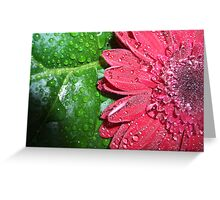 Sun, shade and sprinkles of water Greeting Card