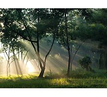 Ray of life  Photographic Print
