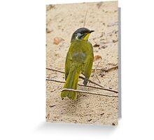 Yellow-throated Honeyeater Greeting Card