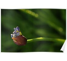 Fresh Bloom Poster