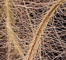 Fox Tail Grass Macro by Sandra Foster