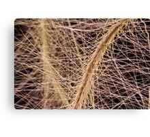 Fox Tail Grass Macro Canvas Print