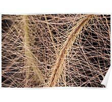 Fox Tail Grass Macro Poster
