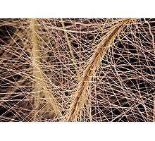 Fox Tail Grass Macro Photographic Print