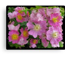 Flowers. South Africa. Canvas Print