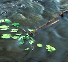 Elm Leaves in Water by Bill Spengler