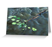 Elm Leaves in Water Greeting Card