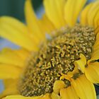 Sunflower by jukeboxphoto
