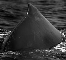 Whale off the port bow by jukeboxphoto