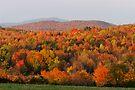 Peak Foliage - Vermont by Stephen Beattie