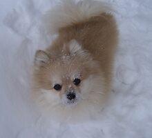 Max the Snow Pom by Christina Rietz