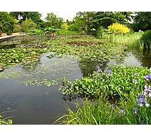 The Lily Pond - A Study in Green Photographic Print