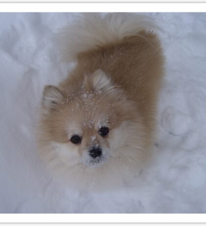 Max the Snow Pom Sticker
