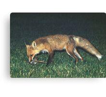 Fox with Rabbit Canvas Print
