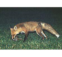 Fox with Rabbit Photographic Print