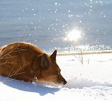 Shining Spirit by Fotography by Felisa ~