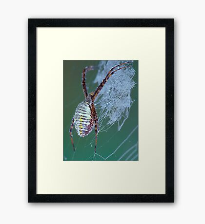 Dew Covered Spider Framed Print