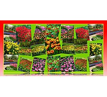 Postcards from Holland - Dutch Bulbs Photographic Print