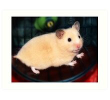 Pipi - the new hamster Art Print