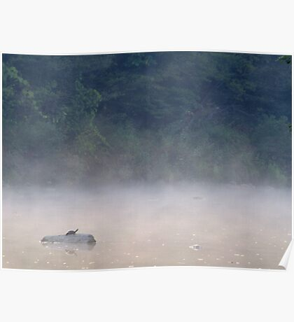 Turtle in the Fog Poster
