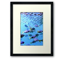 Fish of the Great Barrier Reef Framed Print