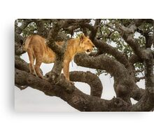 Gnarly Vantage Point  Canvas Print