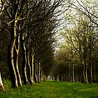 Trees by AnnieSnel