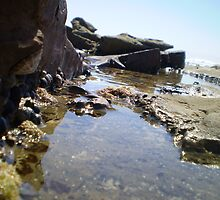 Rock Pool by erattik