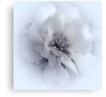A Simple Touch Of Grace .... Canvas Print