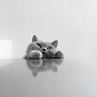 Peeking Cat by Keren Segev