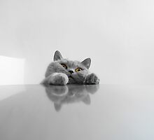 Peeking Cat by Keren Segev