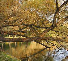 Autumn on my mind by Heather Thorsen