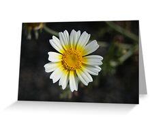 White Wildflower Greeting Card