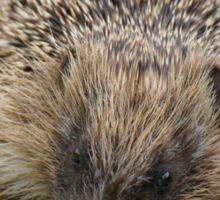 Hedgehog NZ Sticker