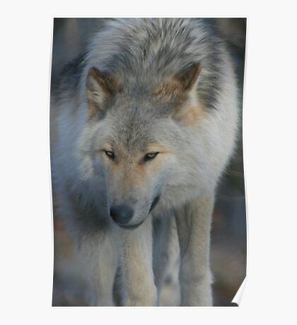 Lakota Wolf Preserve Poster