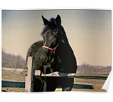 Sweet Black Beauty - The Gifts from Horses Poster