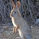 Sunrise Bunny  by Judy Grant