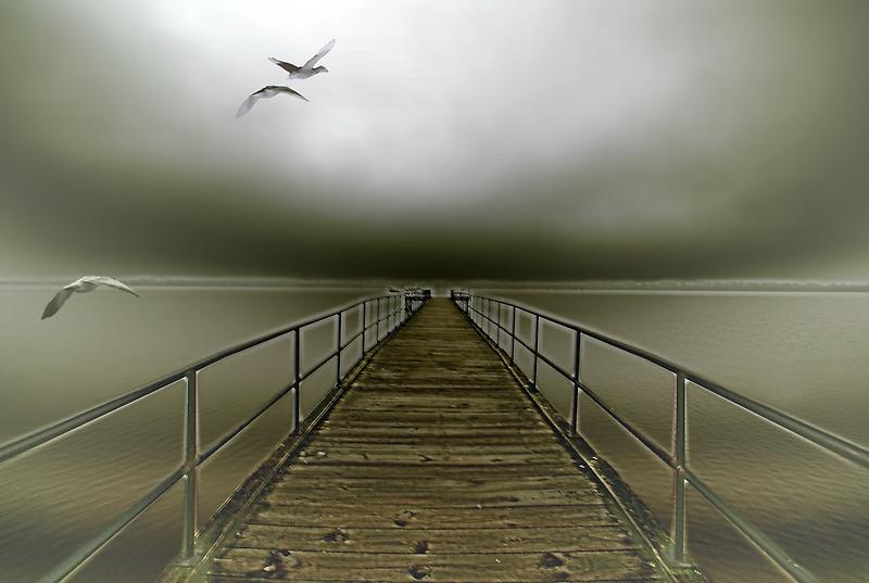geese flight by Alexandr Grichenko