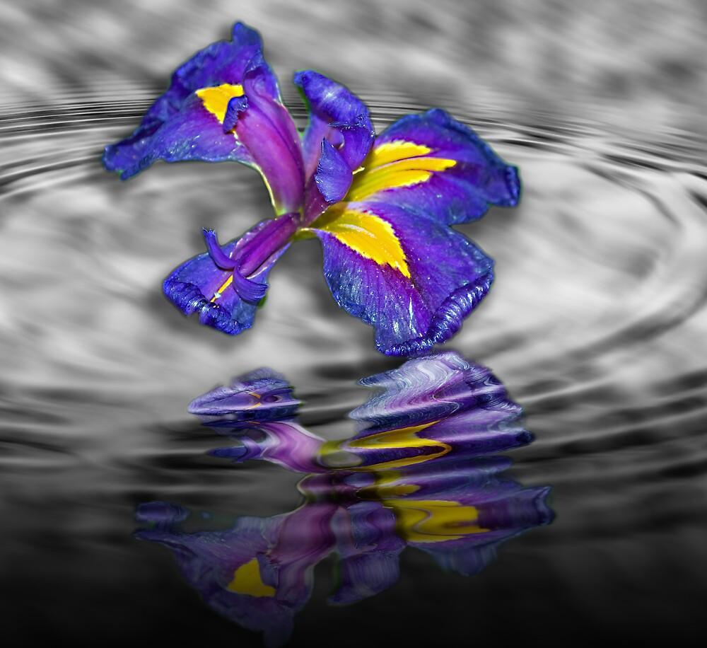 Water Iris by thegrizz15