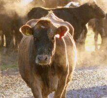 A Steamy Morning - Dairy NZ Sticker